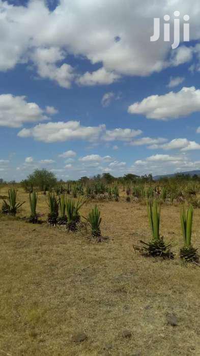 100 Acres For Sale In Juja Farm Mastores 6km From Tarmac.