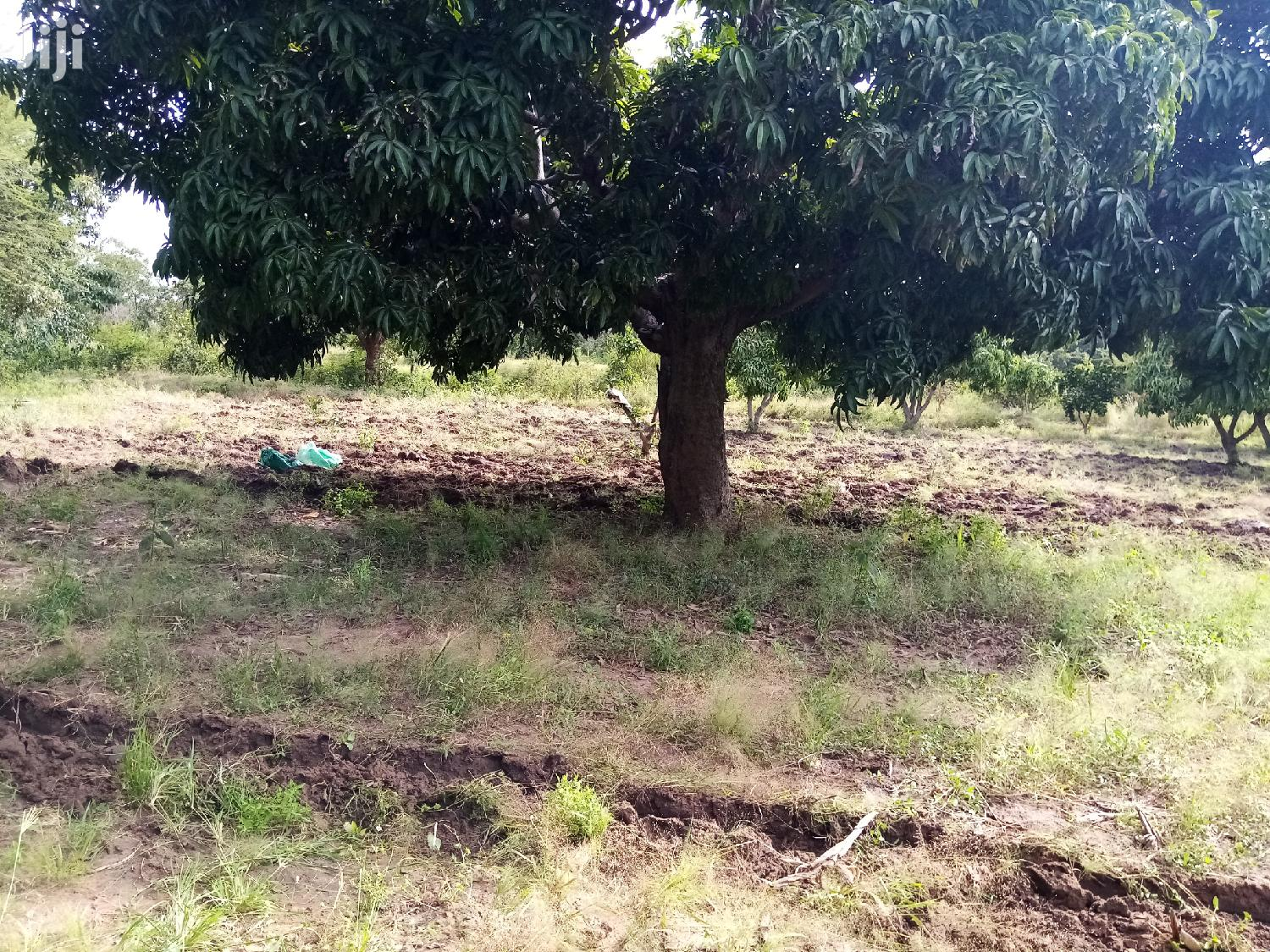 Plot For Sale | Land & Plots For Sale for sale in Masii, Machakos, Kenya