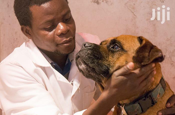 Best Dog Grooming In Nairobi | Pet Services for sale in Westlands, Nairobi, Kenya