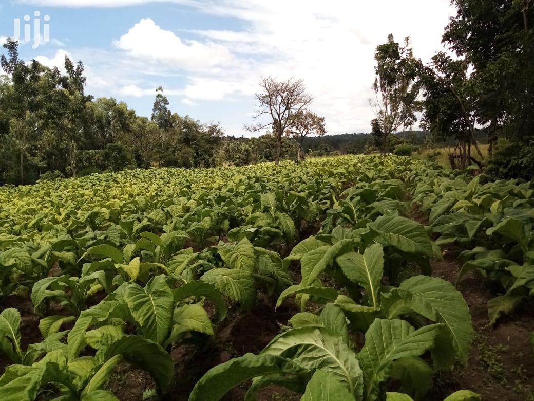 Advertising & Marketing CV | Farming & Veterinary CVs for sale in Bumula, Bungoma, Kenya