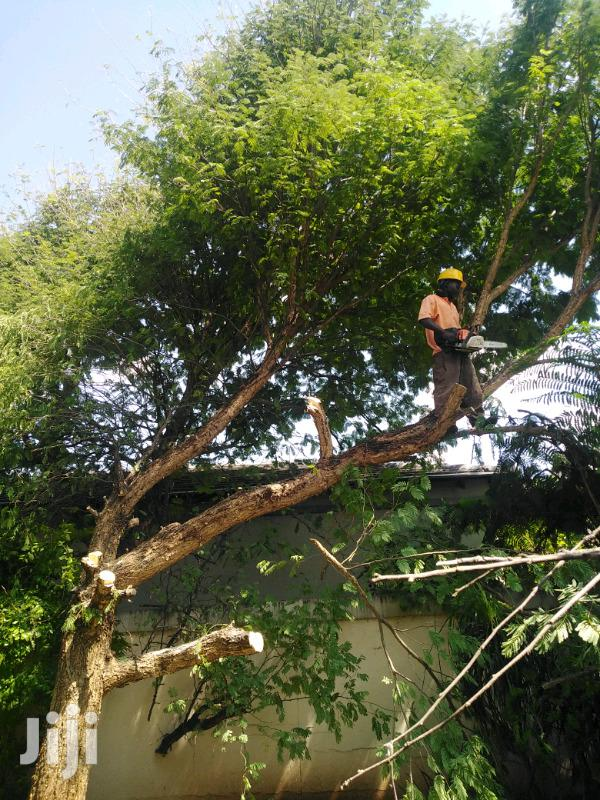 Hire Best Tree Removal Service,Tree Cutting & Pruning Service.Call Now