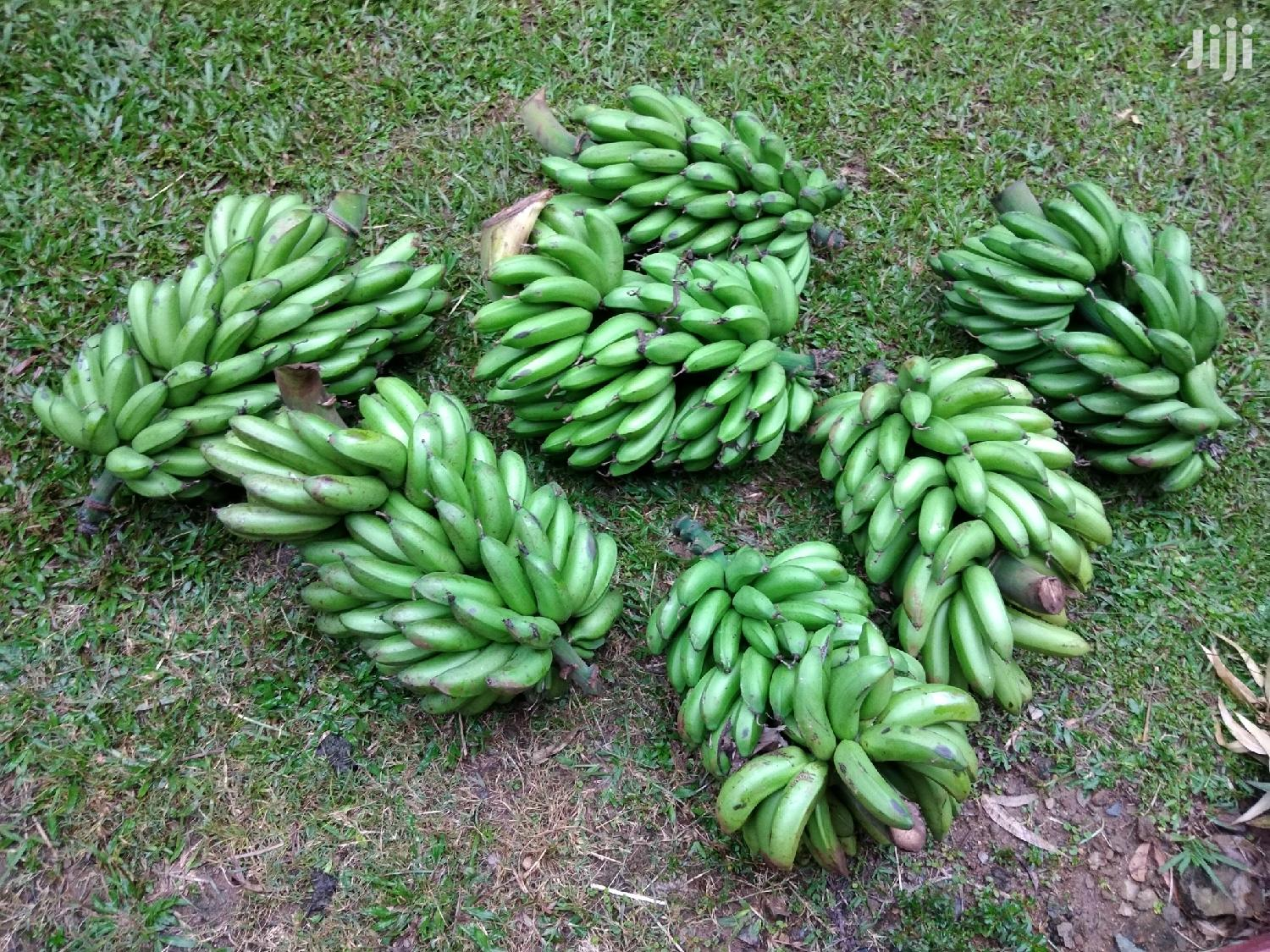 Archive: Green Bananas