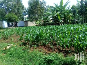 Plot Makutan 300mt 2 Lami   Land & Plots For Sale for sale in Bungoma, Khalaba (Kanduyi)