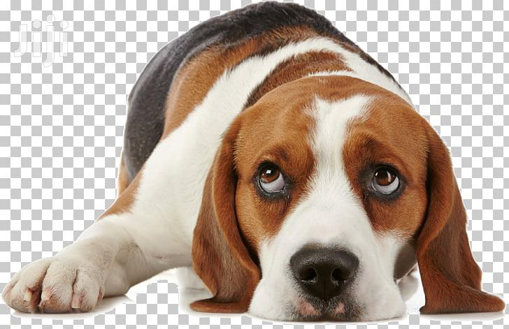 Dog Grooming & Cleaning Services.Quality & Guaranteed Service.Call Now   Pet Services for sale in Westlands, Nairobi, Kenya