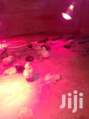 Improved Kienyeji | Livestock & Poultry for sale in Machakos, Syokimau