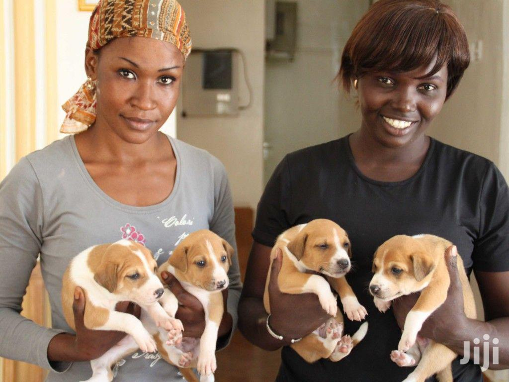 Best Dog Grooming Service,Dog Walking,Pet Sitting & Training.Call Now   Pet Services for sale in Nairobi Central, Nairobi, Kenya