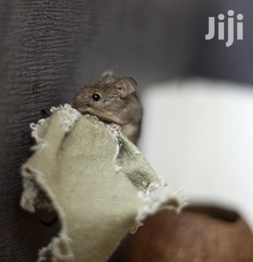 Rats Eradication