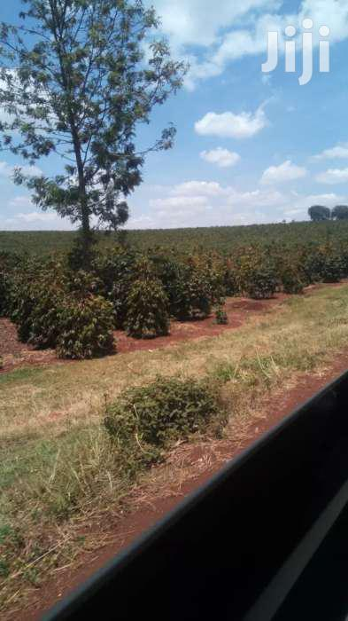 302 Acres For Sale In Kiganjo Rd Off Thika Rd | Land & Plots For Sale for sale in Bunyala West (Budalangi), Busia, Kenya