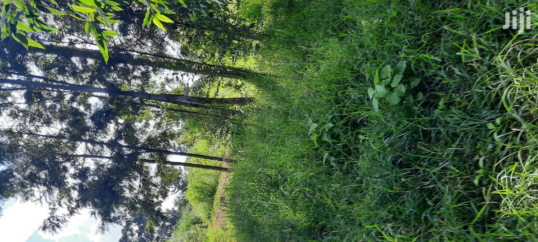 1/2 an Acre Kikuyu Muguga Kiambu County | Land & Plots For Sale for sale in Muguga, Kiambu, Kenya