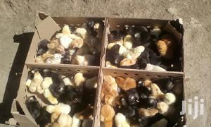 Day Old Chicks | Livestock & Poultry for sale in Nakuru, Nakuru Town East