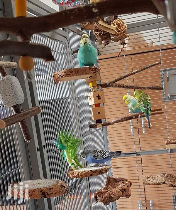 Bird Cage.   Pet's Accessories for sale in Pumwani, Nairobi, Kenya