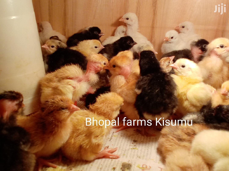 Week Old Improved Kienyeji Chicks | Livestock & Poultry for sale in Kisumu Central, Kisumu, Kenya