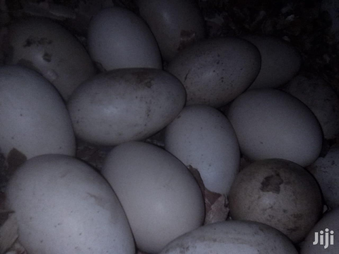 Pure Brahma Chicken Eggs | Meals & Drinks for sale in Tudor, Mombasa, Kenya