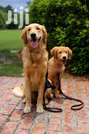 Dog Walking Service Professionals In Nairobi