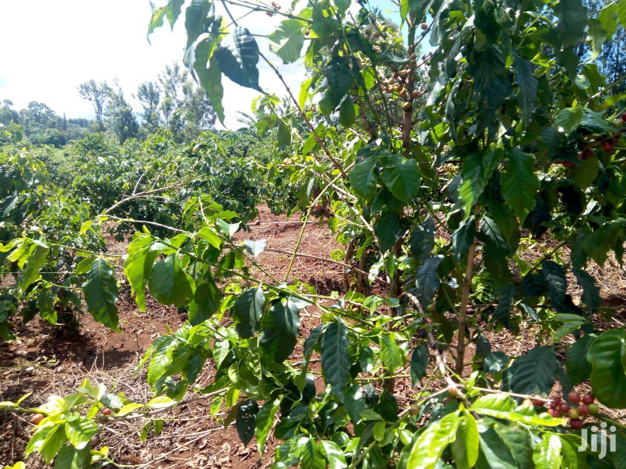 Archive: COFFEE Farm On Sale