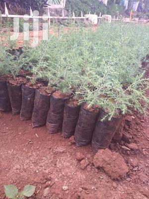 Indigenous Trees Seedling Bags   Farm Machinery & Equipment for sale in Kiambu, Kikuyu
