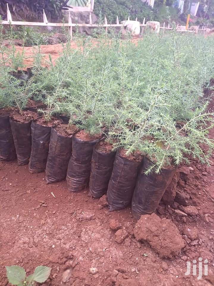 Indigenous Trees Seedling Bags