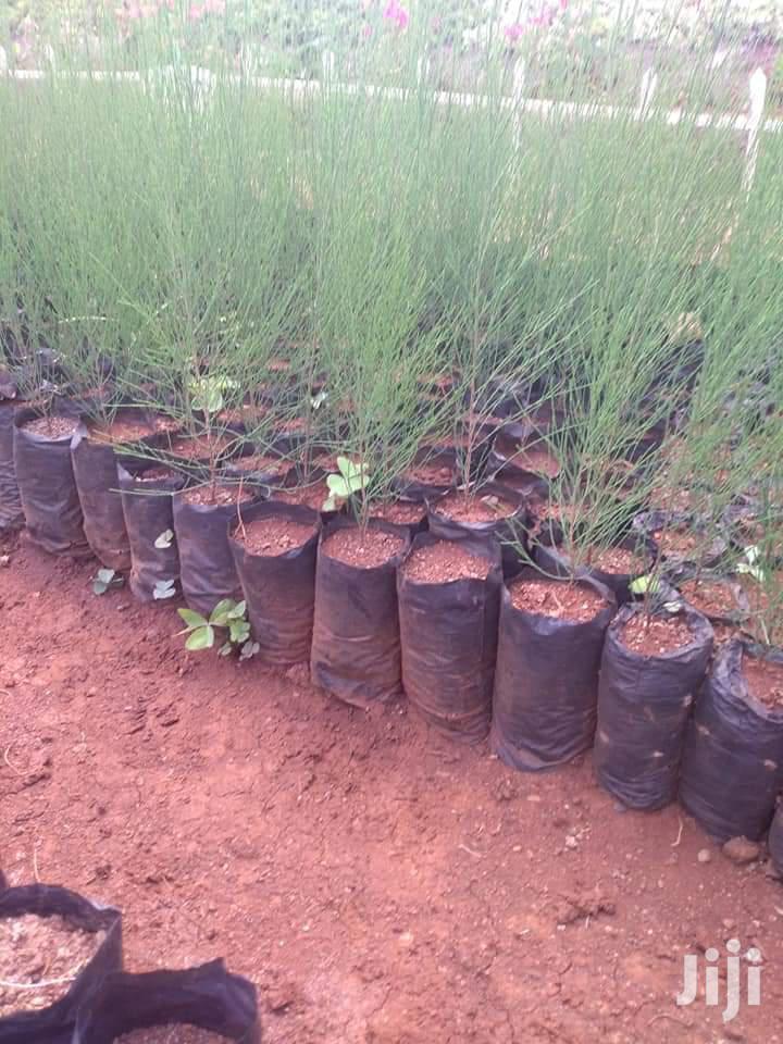 Indigenous Trees Seedling Bags | Farm Machinery & Equipment for sale in Kikuyu, Kiambu, Kenya