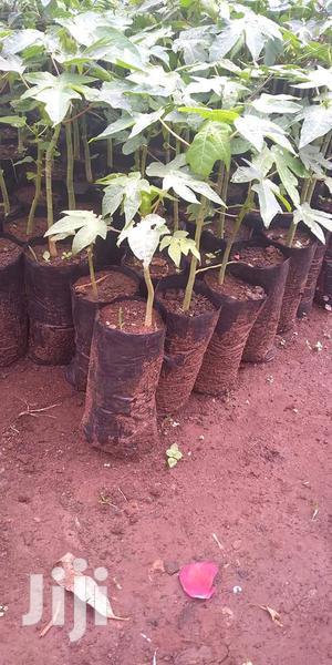 Paw Paw Seedling Nursery Bags   Farm Machinery & Equipment for sale in Kiambu, Kikuyu