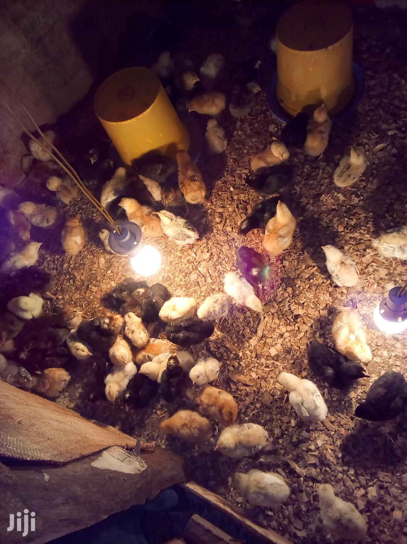 Archive: Waweru Farm
