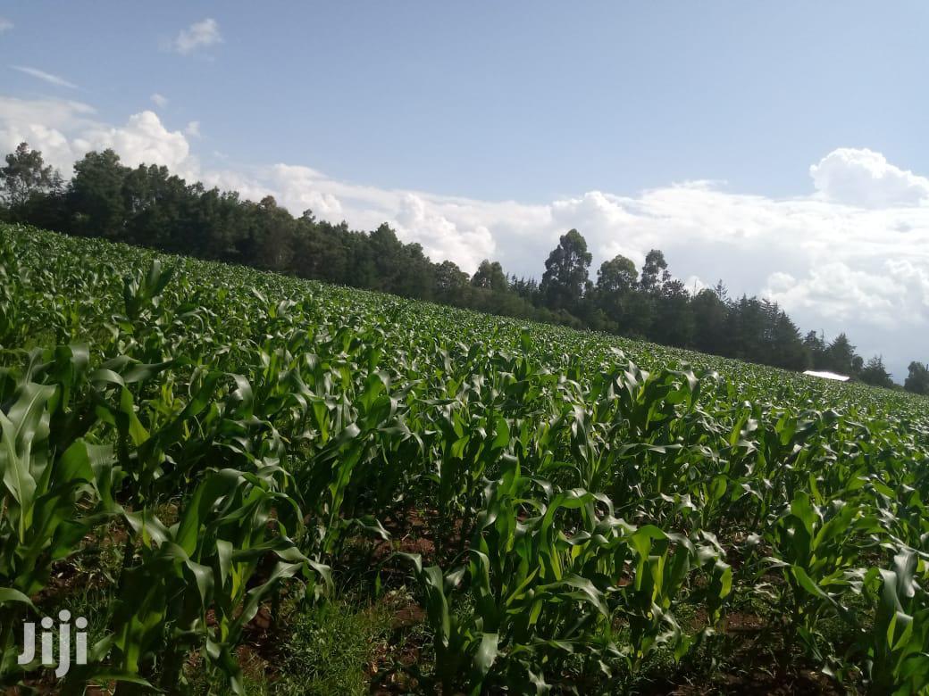 Prime Residential Farm on Sale | Land & Plots For Sale for sale in Cheptiret/Kipchamo, Uasin Gishu, Kenya