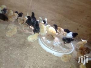 Day Old Chicks | Livestock & Poultry for sale in Machakos, Syokimau