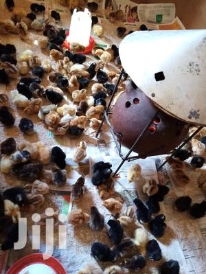 Day Old Chicks, Improved Kienyeji_vaccinated | Livestock & Poultry for sale in Machakos, Machakos Town