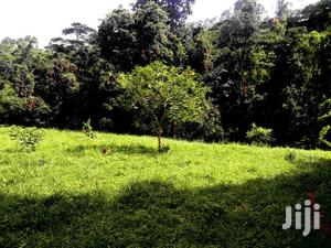 Karen Modern Bungalow for Sale on 1/2 Acre   Houses & Apartments For Sale for sale in Nairobi, Karen