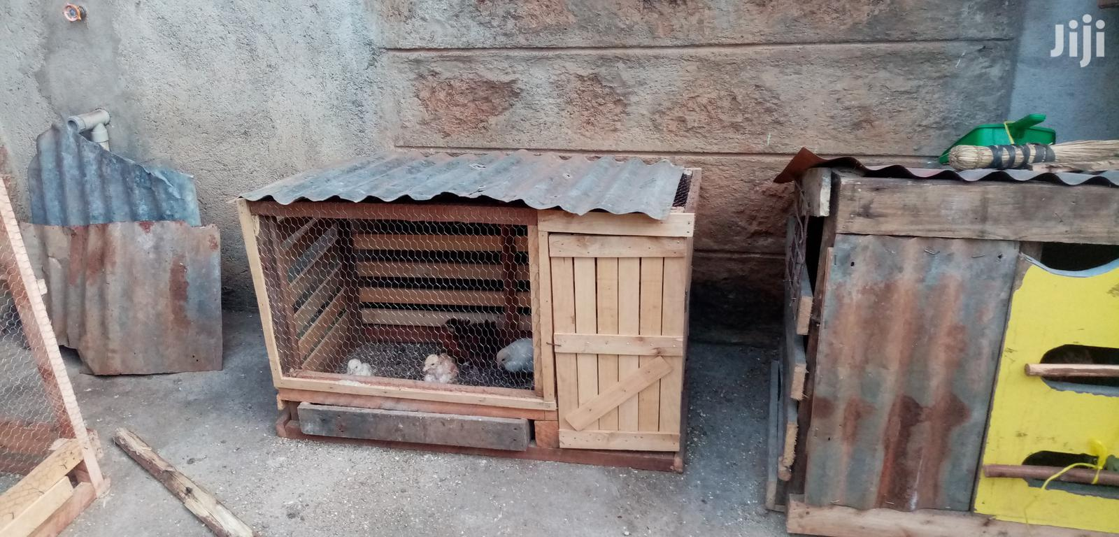 Archive: Classic Chicken Cages
